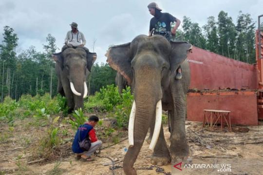 BKSDA translokasi dua gajah di Inhu