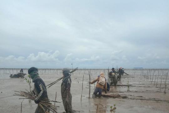 BRGM: rehabilitasi mangrove bantu masyarakat di tengah pandemi