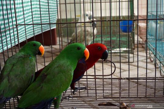Penggagalan penyelundupan hewan asli Papua