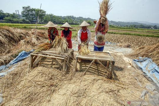 Kementan: produksi pangan dalam negeri terpenuhi tekan impor