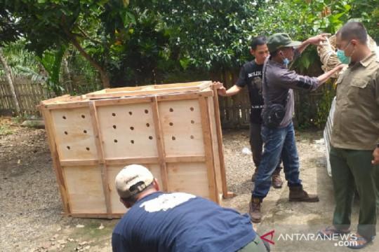 Polisi sita seekor rusa sambar dalam Operasi Wanalaga di Bengkulu