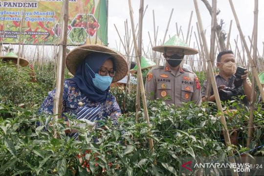 Bupati Bogor upaya tingkatkan produktivitas cabai di 59 hektare lahan