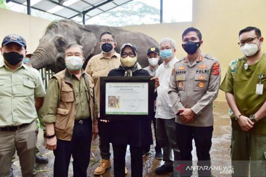 Bayi gajah di Taman Safari Indonesia dinamai Bonesia oleh Bupati Bogor