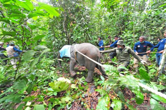Kemarin, konflik gajah dan warga hingga juara olimpiade internasional