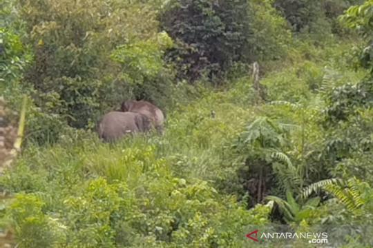 Gajah dari Jambi serang warga Indragiri Hilir