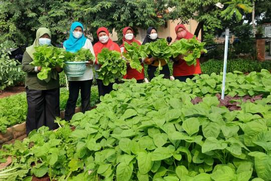 "BPP Ujung Menteng panen 190 kilogram sayur hasil ""urban farming"""