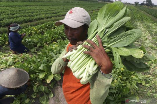 BPS: Nilai Tukar Petani Agustus 2021 naik 1,16 persen