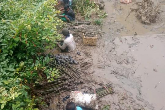 Program penanaman mangrove BRGM dinilai bermanfaat untuk petambak