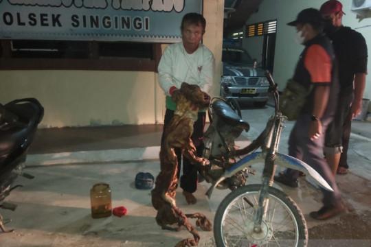 KLHK gagalkan penjualan kulit harimau dan janin rusa di Riau