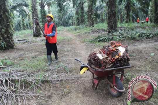 Para petani sawit di PTPN VIII tak terdampak pandemi