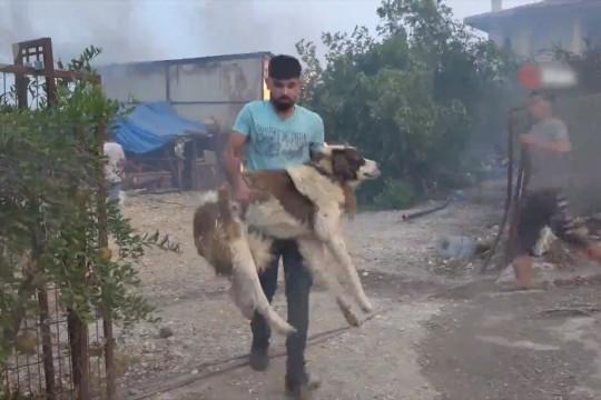 Dokter hewan bantu binatang yang terluka dalam kebakaran hutan Turki