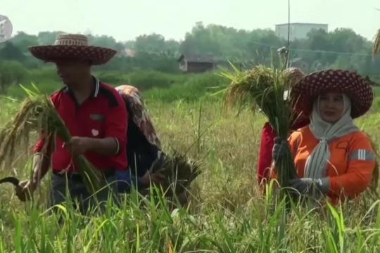 Tumbuh 0,38 persen, pertanian siap genjot ekspor