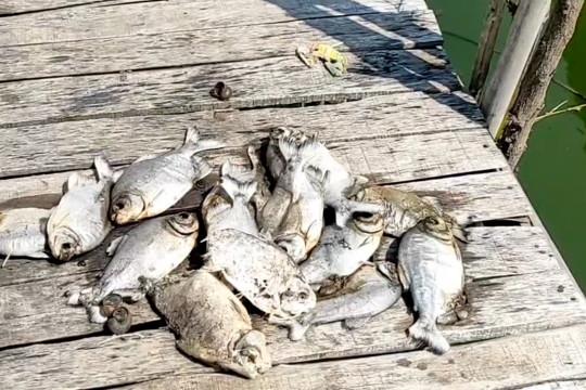 Ratusan ekor ikan mati, limbah industri diduga cemari empang warga