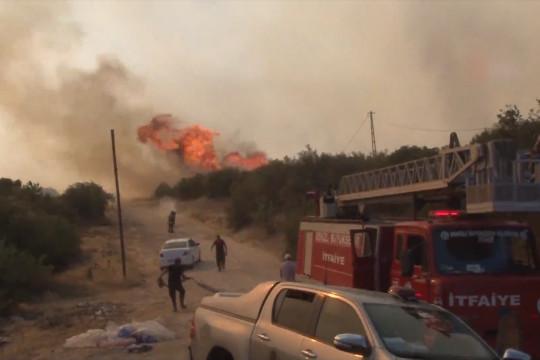 Sedikitnya delapan orang tewas dalam kebakaran hutan di Turki