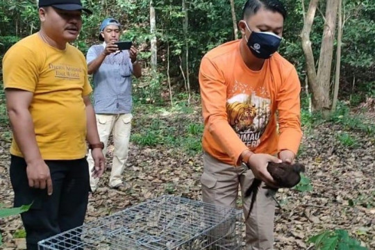 BBKSDA apresiasi dokter lestarikan burung kuau kerdil Sumatera