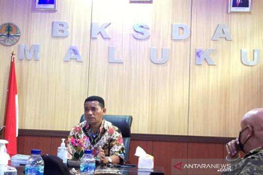 BKSDA minta dukungan Gubernur Maluku bangun pusat konservasi satwa