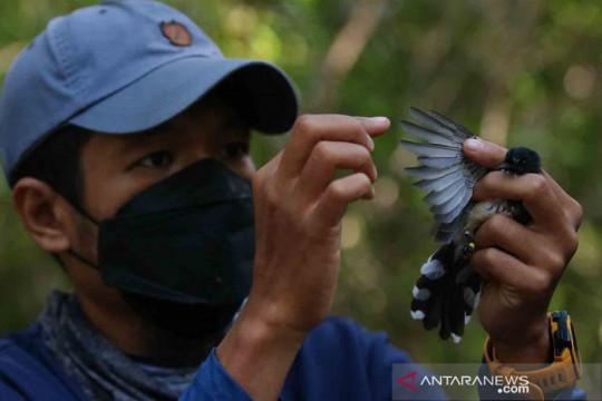 Pendataan burung di kawasan Hutan Mangrove Gunung Anyar