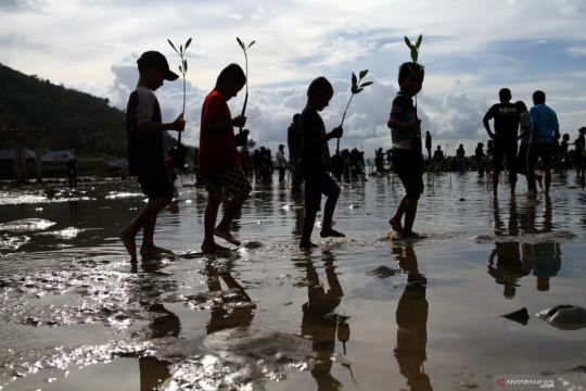Tanam pohon mangrove untuk cegah abrasi di pesisir pantai