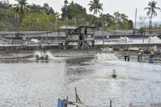 "Pengamat: ""Shrimp estate"" harus perhatikan aspek pengolahan limbah"
