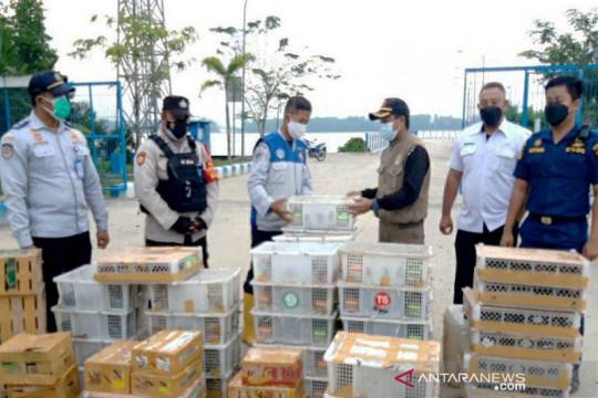 Petugas di Kalteng gagalkan penyelundupan 2.044 burung ke Pulau Jawa