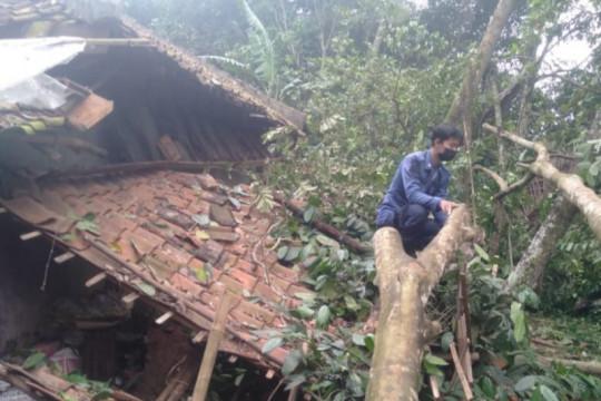 Dua rumah rusak akibat tertimpa pohon tumbang di Tangerang