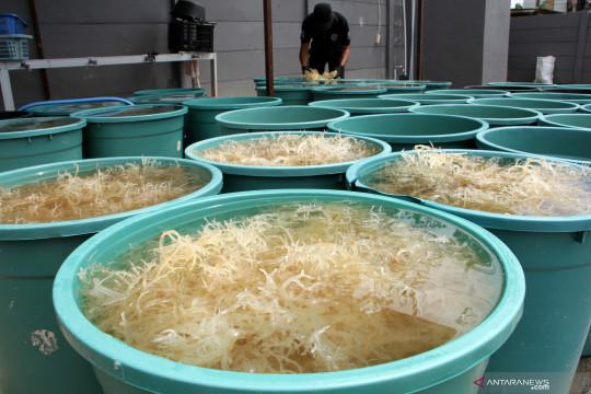 Kemenperin mendorong peningkatan produktivitas dan daya saing industri pengolahan rumput laut