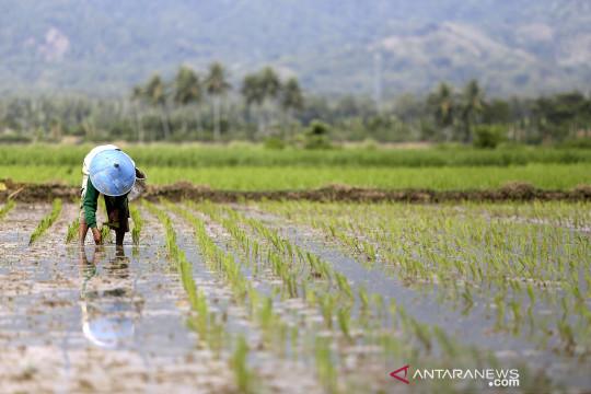 BPS: Tiga subsektor alami peningkatan Nilai Tukar Petani