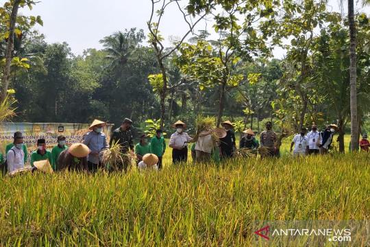 Kulon Progo evaluasi metode penghitungan produksi padi