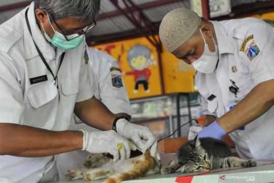 Sterilisasi  kucing di Jakarta