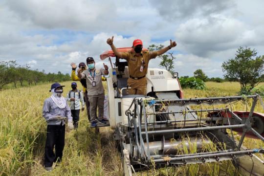 Pemerintah daerah di Kalsel diminta anggarkan pembelian gabah petani
