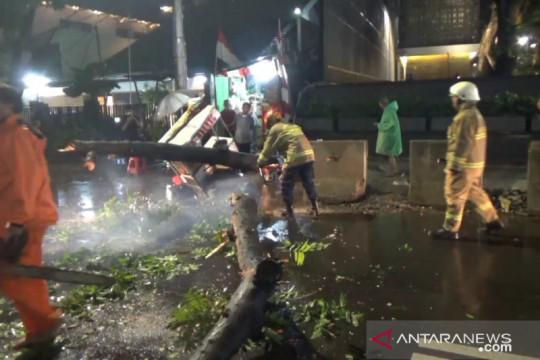 Pemkot Jaksel siagakan petugas untuk antisipasi pohon tumbang
