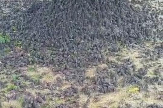 BKSDA: Ratusan burung pipit mati, diduga makan pakan tercemar