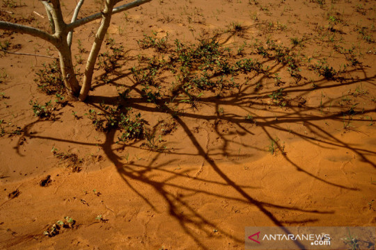 Lahan pertanian terdampak limbah tambang emas