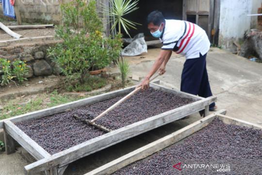 Merajut asa petani kopi Bondowoso binaan Unej ekspor ke Eropa