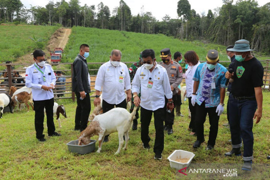 Mentan: Kambing Boer Kaltara berpotensi diekspor ke Asia