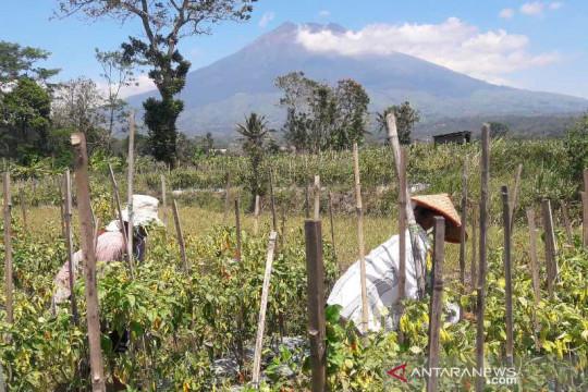 Kementan-Pemkab Temanggung siapkan 300 ha lumbung pangan hortikultura