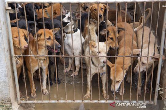Pasar Jaya benarkan oknum pedagang jual daging anjing di Pasar Senen