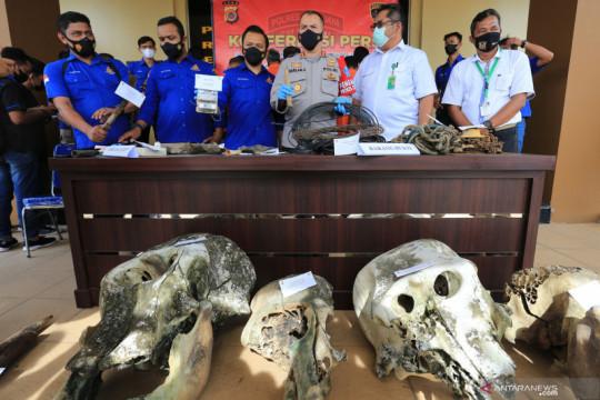 Polri rilis kasus pembunuhan Gajah Sumatera