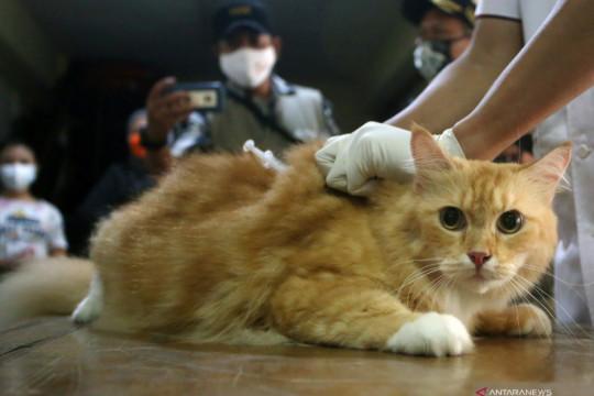 Vaksinasi rabies hewan peliharaan