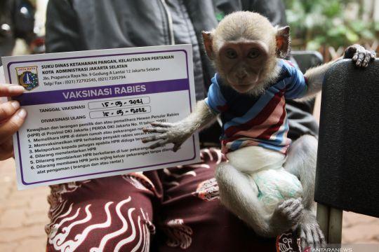 RT/RW di Jakarta diminta awasi lalu lintas hewan penular rabies