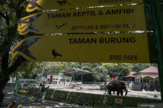 GL Zoo beri diskresi pengunjung di bawah 12 tahun dengan syarat ketat