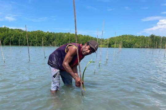 BRGM laksanakan penanaman mangrove perdana di Sarmi