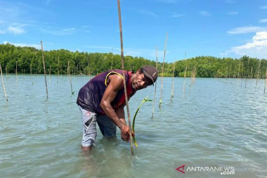 BRGM: Penanaman mangrove pulihkan ekonomi warga Papua di masa pandemi
