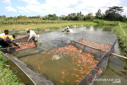 Program elektrifikasi pertanian dongkrak produktivitas budidaya nila