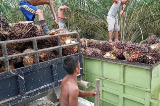 Harga CPO Jambi naik tipis, tembus di atas Rp12.000 per kilogram
