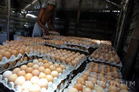 Peternak ayam di Blitar keluhkan harga telur semakin turun