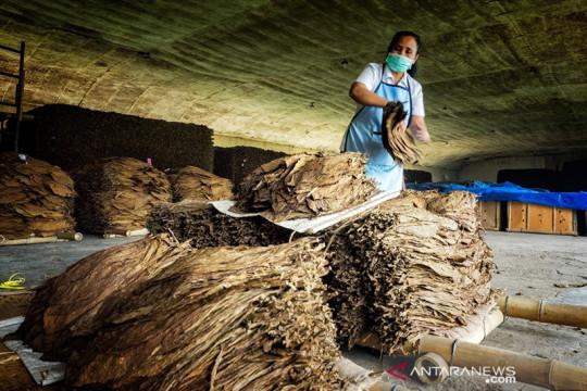 Produksi tembakau PTPN X meningkat 204 ton per Agustus 2021