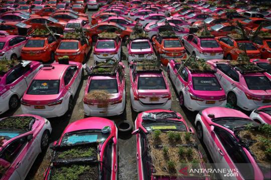 Aksi tanam sayuran dan buah di atap taksi tak terpakai akibat krisis bisnis Thailand