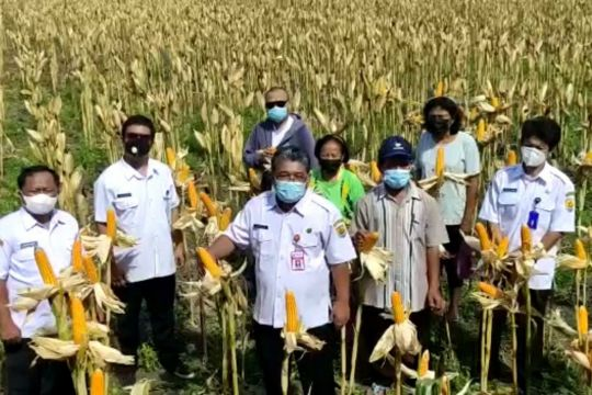 Kabupaten Grobogan Jateng siap pasok kebutuhan jagung peternak