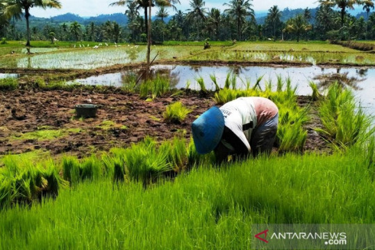 RNI: Penggabungan BUMN pangan perkuat ekosistem pangan